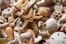 3 Great Beaches for Treasure Hunting