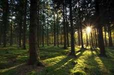 8 of the Most Amazing Forests on Earth